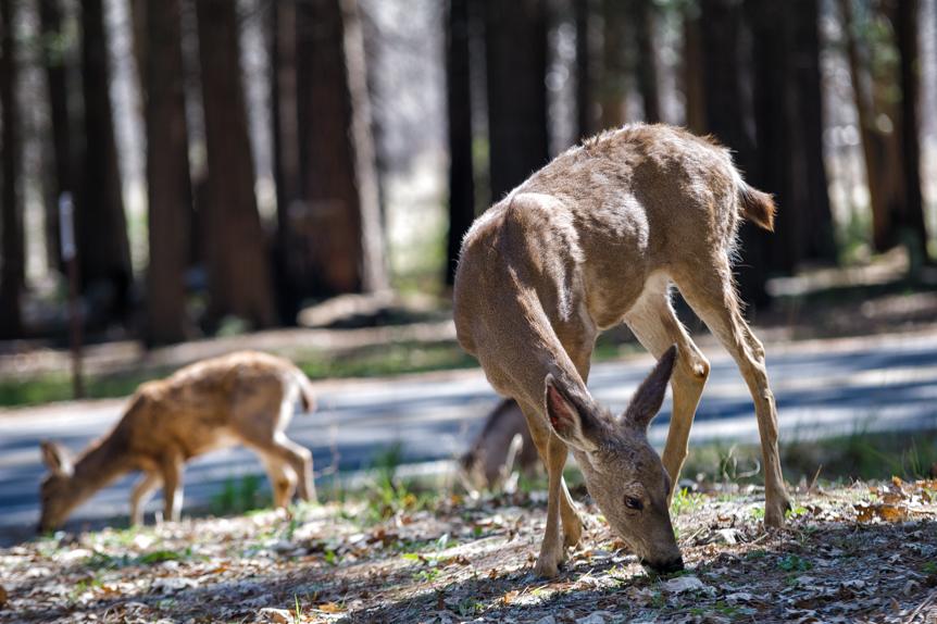 Yosemite023