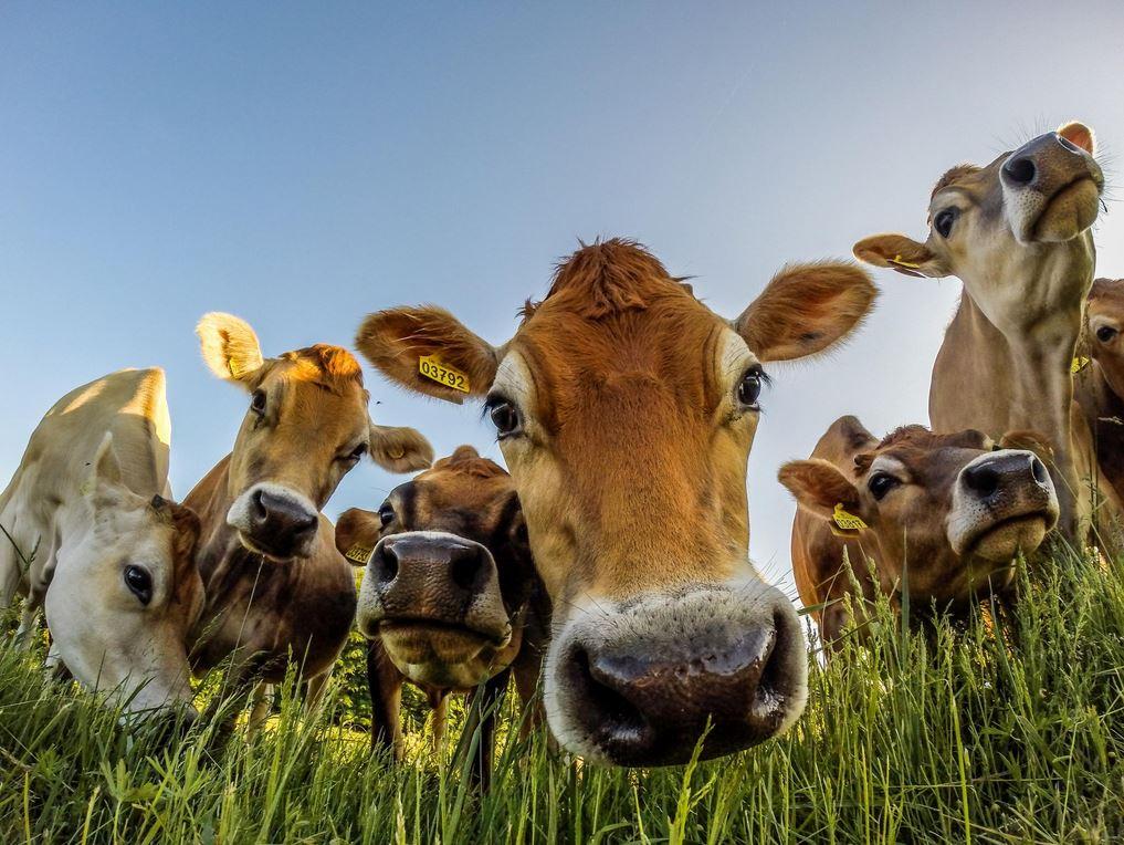 arguments contre le végétarisme