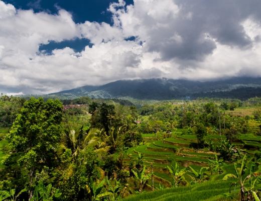 Volontariat à Bali