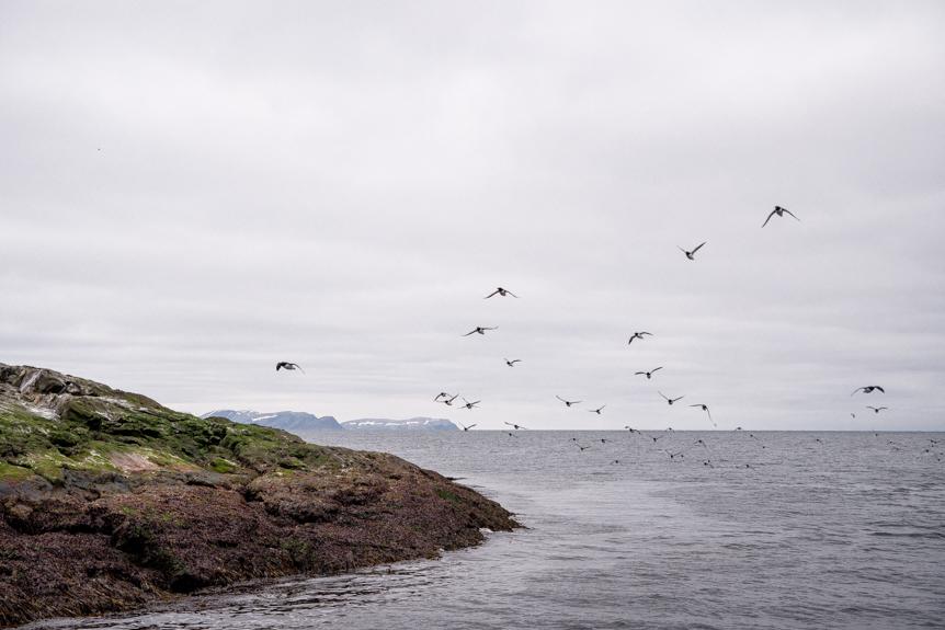 safari oiseaux norvège du nord