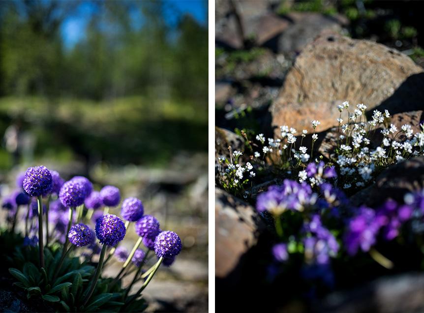 jardin botanique arctique